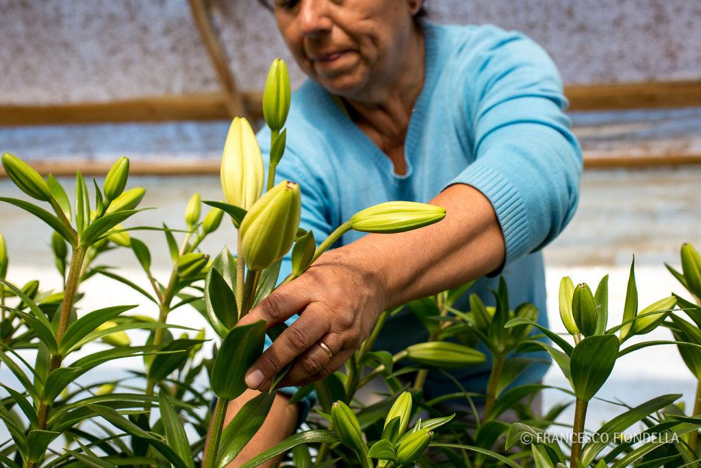 Dina cuts flowers