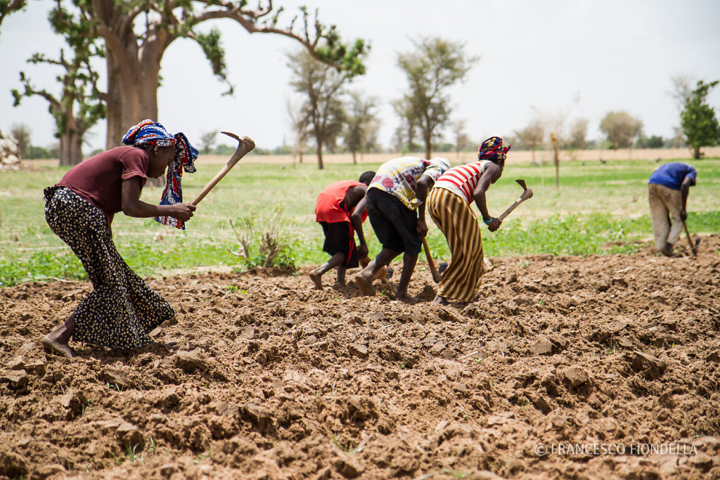 Sahel farming