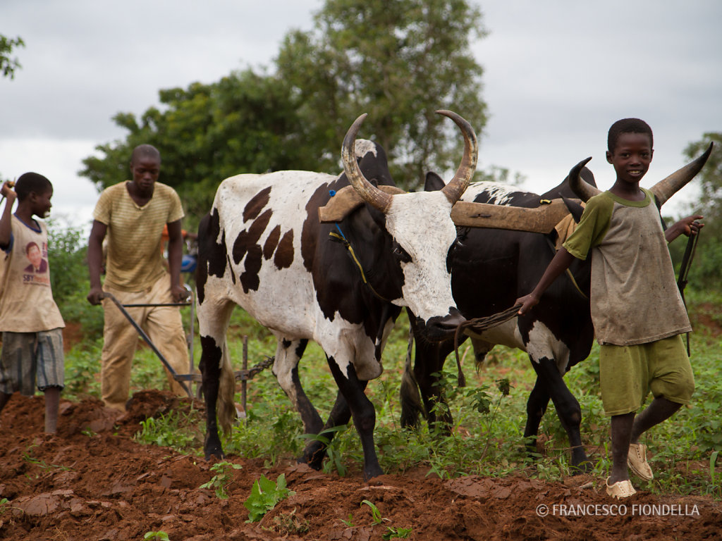 Plowing, Mali