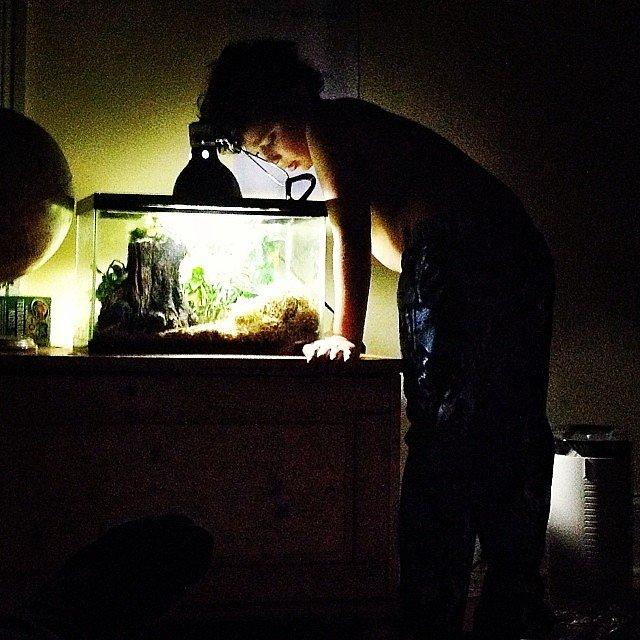 Goodnight, Gecko.